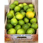 Sizilianischen Zitronen von Ribera