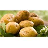 Italienische Kartoffeln
