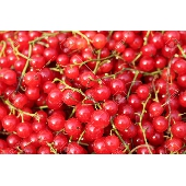 RIBES ROSSO - rote Johannisbeere