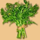 Frijarielli - Neapolitanischer Broccoli