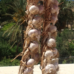 Roter Knoblauch aus Nubia